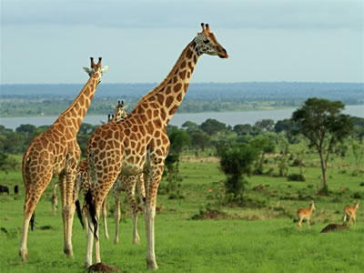 Tanzania-Long-safari