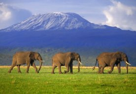 Tanzania budget safari package 5 days