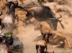 northern tanzania safari package