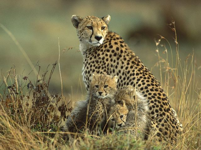 Best-of-Kenya-and-Tanzania-Budget-Safari-16 days