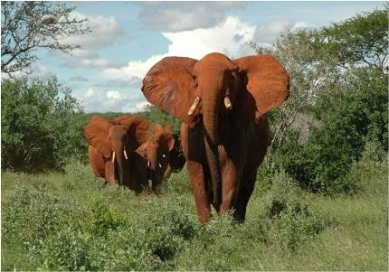elephant_of_tsavo_east_nationalpark