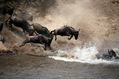 JOINING  KENYA MIGRATION SAFARI 6 DAYS