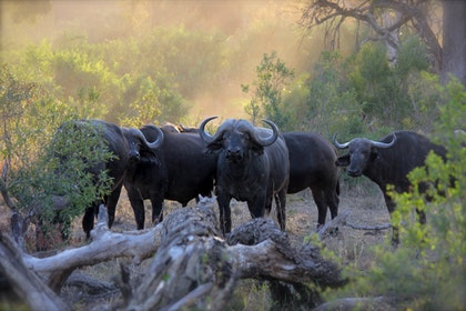 Tanzania Migration Safari 5 days